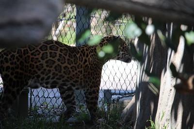 SD Zoo 2019-05-28