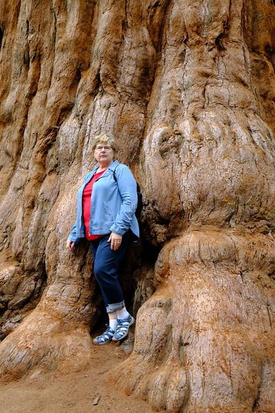 California Day 6 Sequoia 05-30-2017 86.JPG