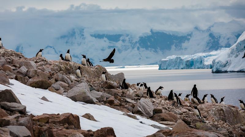 _MG_5831_20170120_Antarctica.jpg