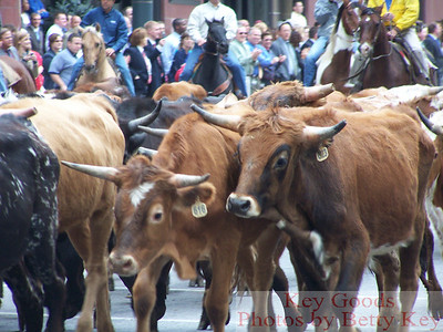 KC Cattle Drive 10-12-07