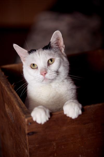 Polzin Cats-16.jpg