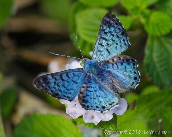 Texas Butterflies, Birds & Critters - October 2016
