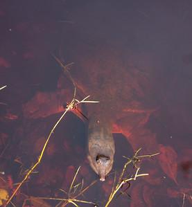 TurtleLngNose DingDarlingFL_IMG_3130_11-02-02