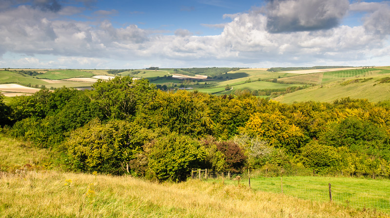 Dorset fields in the Sydling Valley