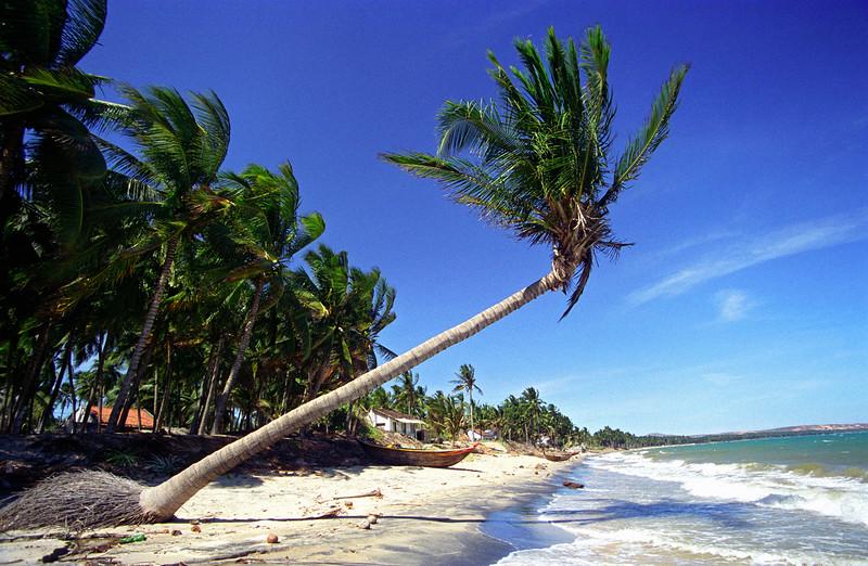 White-sand Beach with Palm Trees, Mui Ne