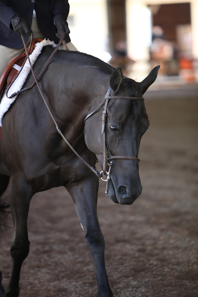 Green Hunter Under Saddle