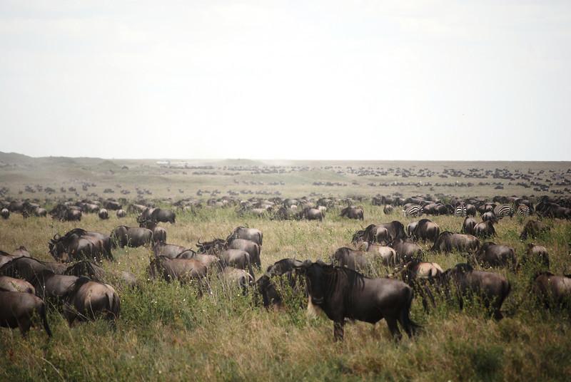 Serengeti (60).JPG