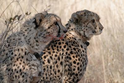 Urlaub in Afrika 2012