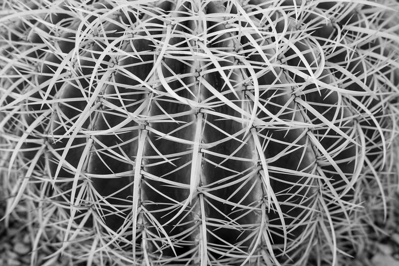 Tucson_17-86.jpg