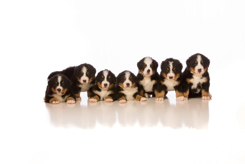2012-Pearson Puppies 2-Sep09-0442-Edit.jpg