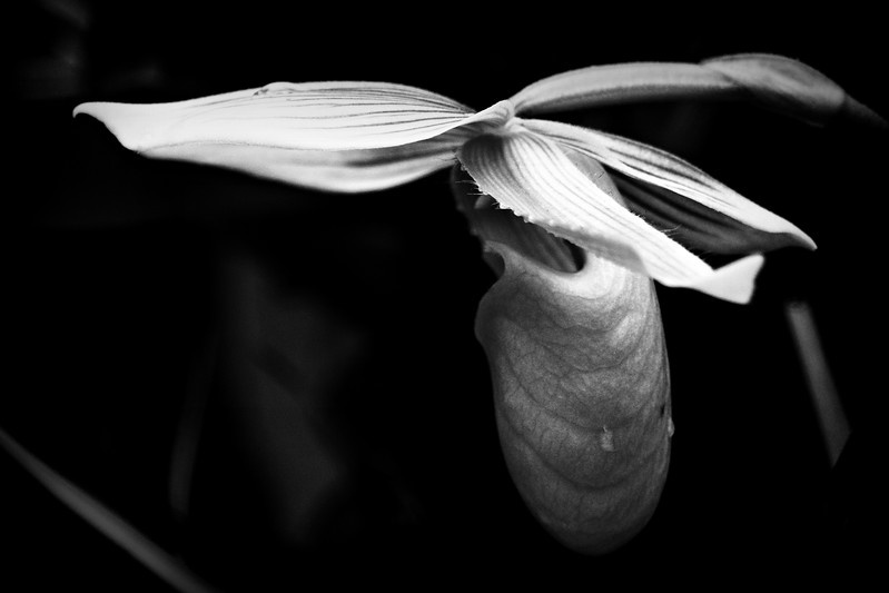 Cleveland Botanical Garden in Black and White