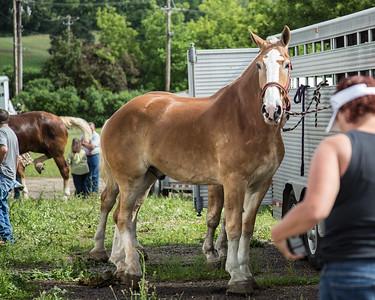 Deerfield Horse Pull