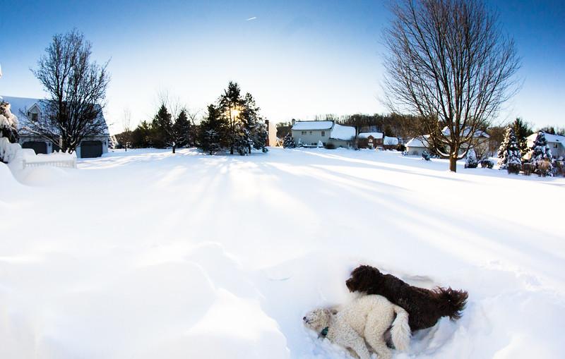 snowfall-03524.jpg