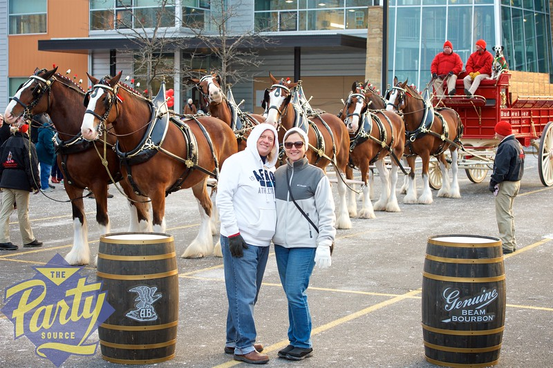 Clydesdale Portraits 114.jpg