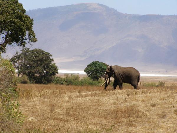 Tanzania and Kenya