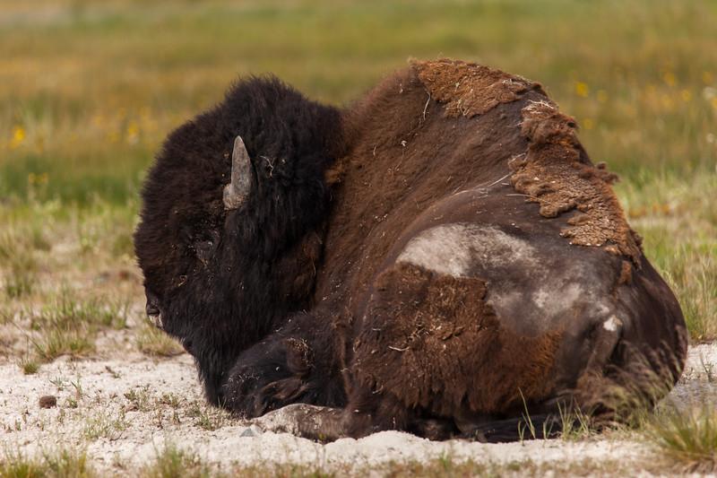 Yellowstone Misc-31.jpg