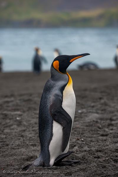 Antarctic-127