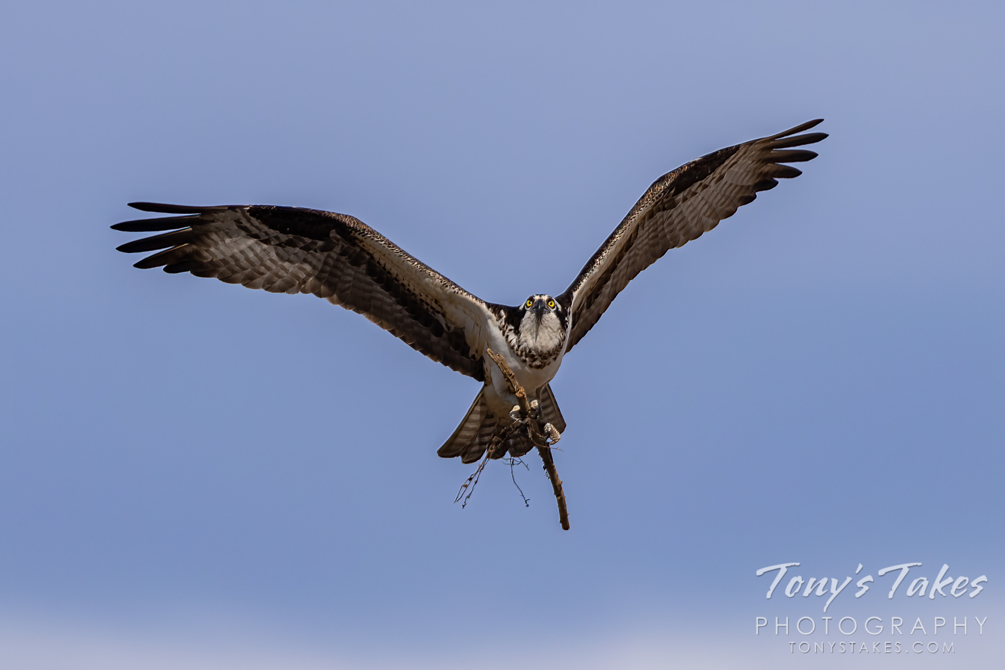 "Osprey focused on ""sticking"" the landing"
