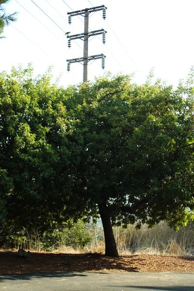 DebsPark029-RoadTreeAndTelephonePole-2006-10-06.jpg
