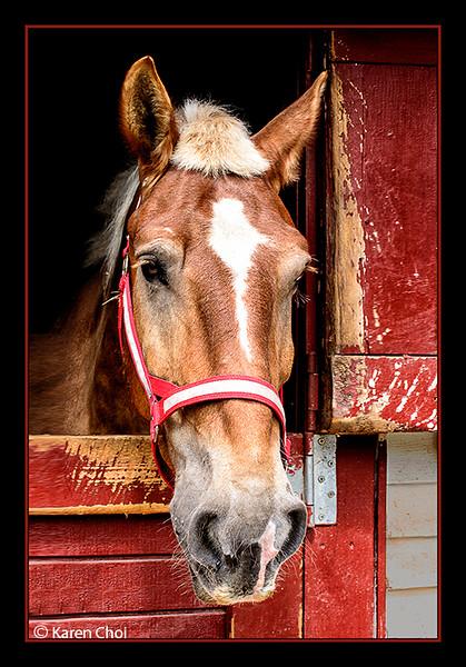 Brown horse sm.jpg