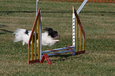 GNYHC Agility Trials 7/3/2010