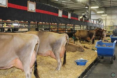 Wisconsin Dairy Showcase Barn Candids 2017