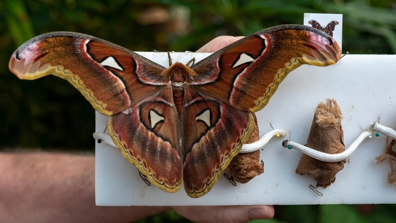 Florida-Keys-Key-West-Butterfly-Conservatory-10.jpg