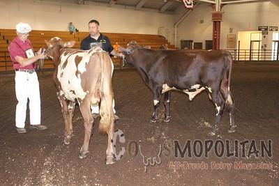IL SF 16 Milking Shorthorn Show