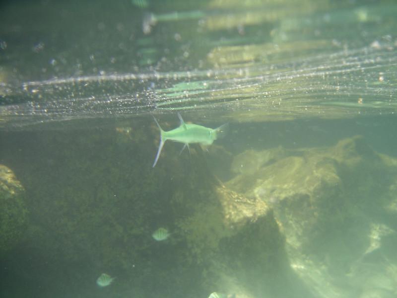20 Strange Fish Leaving.jpg