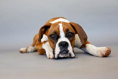 MOVIE DOGS  7-12-19