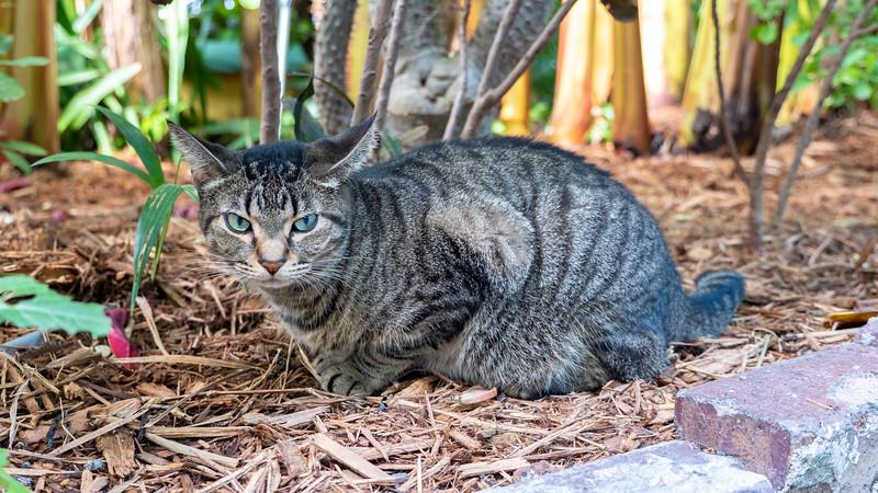 Florida-Keys-Key-West-Hemingway-Home-Cats-06.jpg