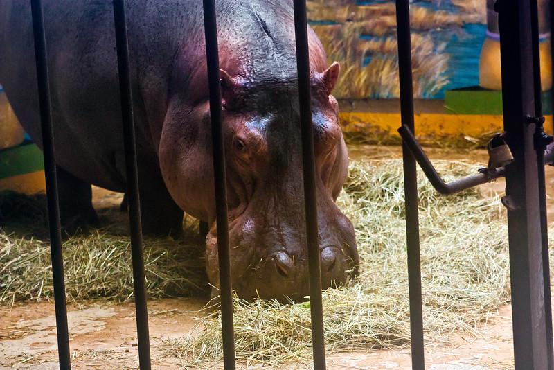 Animals_058.jpg