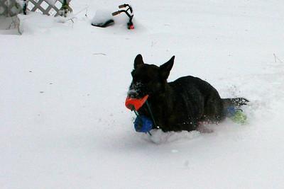 2009.12.9 Brita in Snow after Blizzard