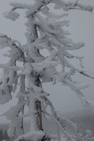 4780- Ice on Tree-©Yvonne Carter.jpg