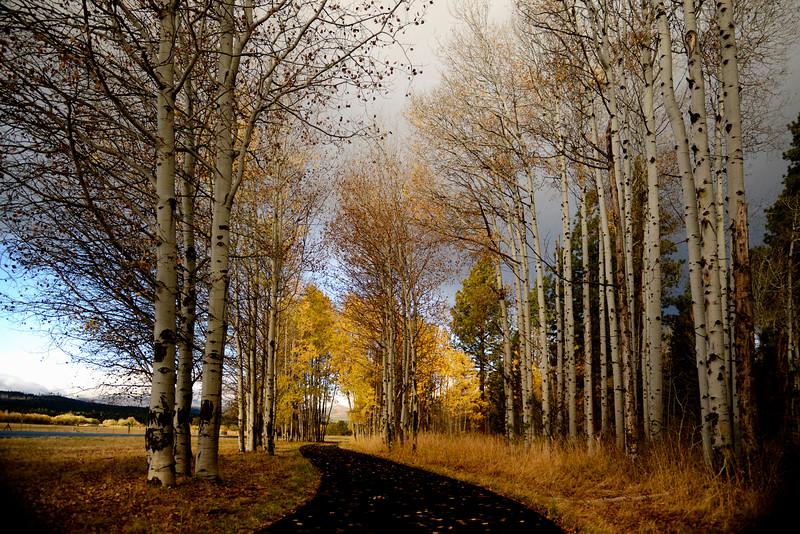 fall-aspen-on-the-verge-of-winter_KTK9549.jpg