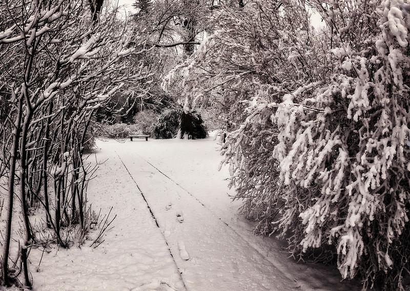 WINTER 31.jpg