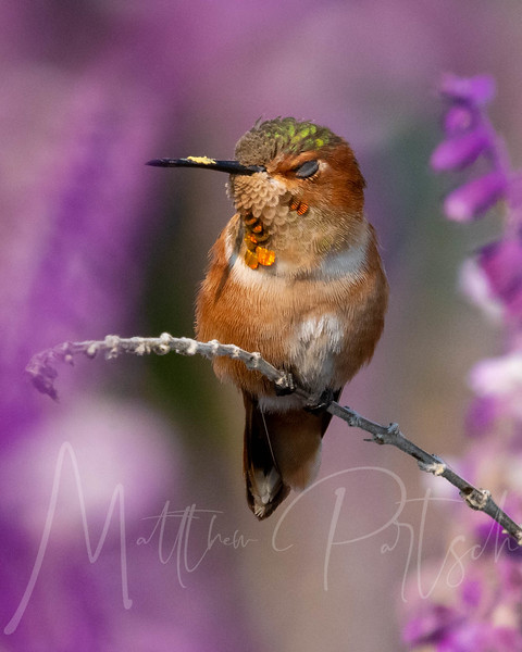 """""""You know you're in love when you can't fall asleep because reality is finally better than your dreams."""" ― Dr. Seuss • Part of my sleeping hummingbird collection. (They are blinking) ==================== NIKON D500 150.0-600.0 mm f/5.0-6.3  600 mm 1/2000 sec at ƒ / 9.0 ISO 1250 ==================== #hummingbird #beautifulnature #animalonearth #extreme_wildlife #vision_natura #fiftyshades_of_nature #bns_macro #macro_brilliance #macroworld_tr #macro_vision #top_macro #bbofig_hummer #hummingbirdphotography #hummingbirdsofinstagram #hummingbirds #hummingbirdfreaks #allenshummingbird #birds #birdofinstagram"""