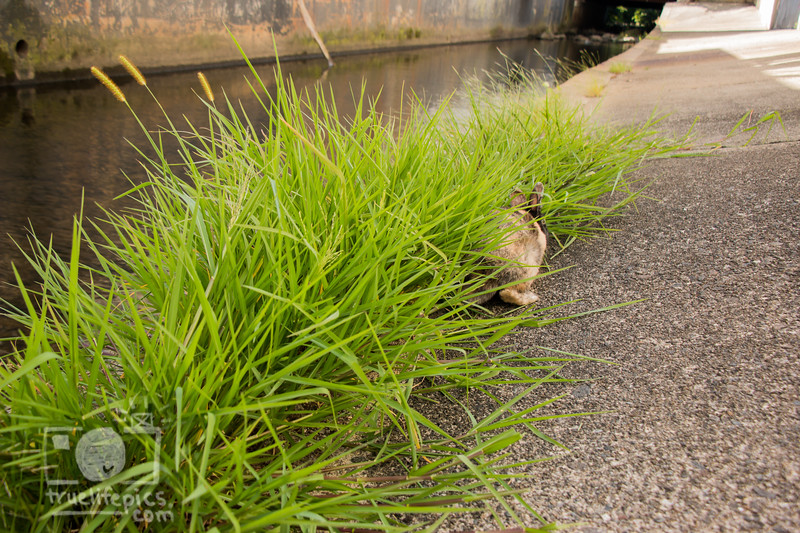 August 23, 2016 Bunnies on the Canal (37).jpg