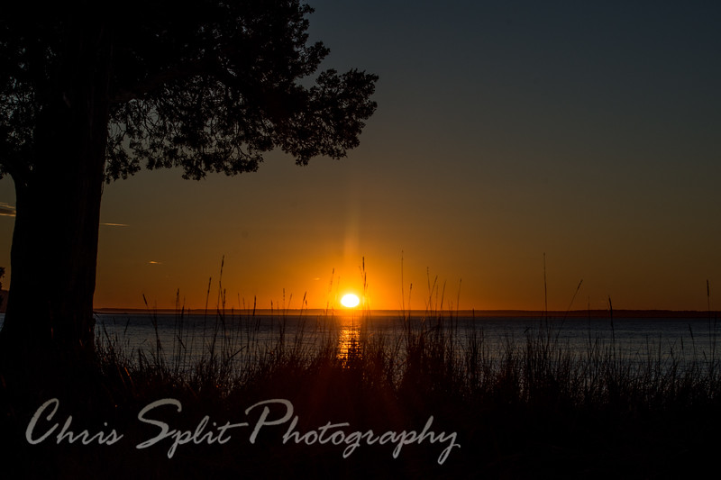 sunset tree and grass (1 of 1).jpg