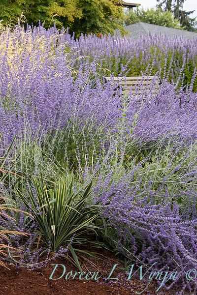 Perovskia atriplicifolia - Yucca filamentosa 'Bright Edge' - grass landscape_1322.jpg