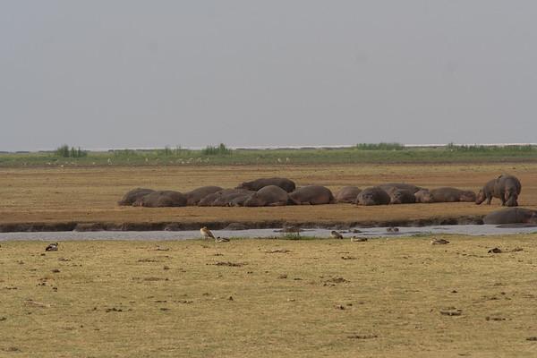 Lake Manyara #3