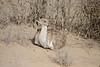 Saih al Salam--Al Qudra Pivots,<br /> © Mitka Engebretsen