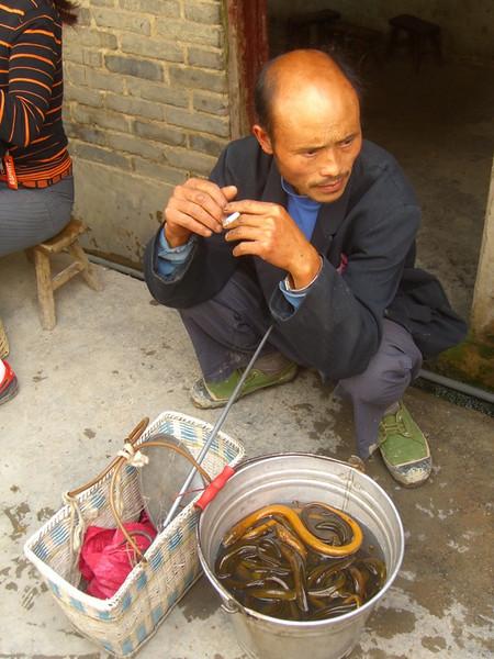 Eels in a Pot - Guizhou, China
