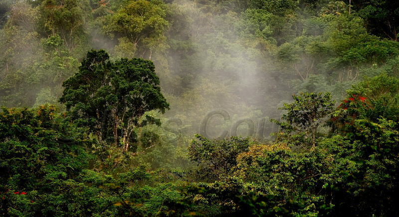 Honduras 0041_.jpg