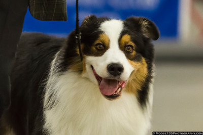 Greater Monroe Kennel Club Dog Show - March 2018
