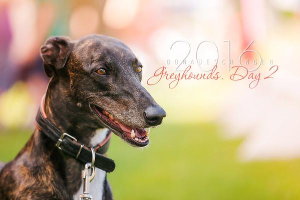 Donaueschingen Greyhounds Day 14/08/2016