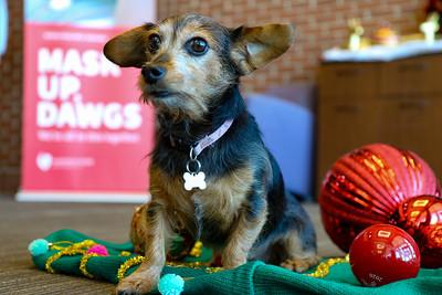 Dog Christmas Photo Day