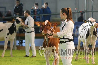 Holstein Heifers Verona 2016