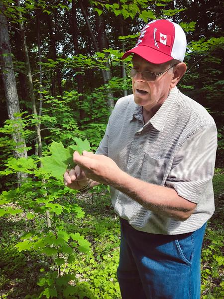 ottawa valley maple adventures maple walk.jpg