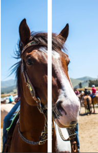 Weekly Assignment #9- Diptych